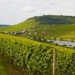 winnice koło Luxembourga Saverne Alzacja Lotaryngia wakacje na barce