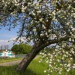 Wiosna Alzacja wakacje na barce
