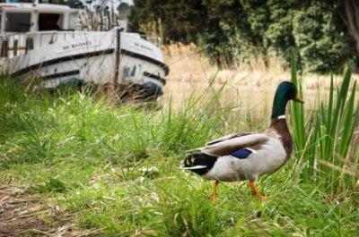 Ekologia na szlaku wakacje na barce