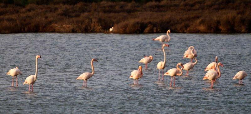 Flamingi Francja region Camargue Canal du Midi