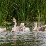 Pętla Żuławska flora i fauna