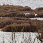 Rozlewiska Camargue wakacje na barce flamingi