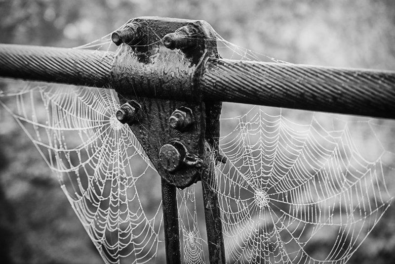 pajęczyny na moście w Vianne